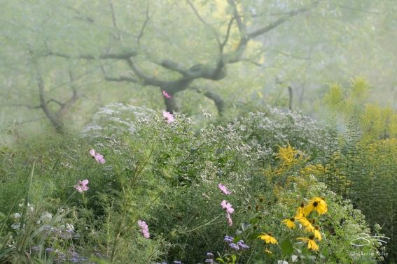Misty Central Park 9/17/2017