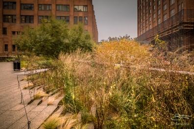 High Line 11/13/2017