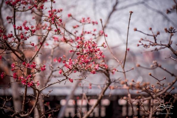Cherry, High Line 3/3/2018