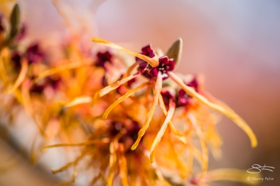 Witch Hazel, High Line 3/3/2018