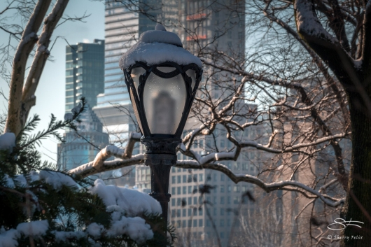 Lamp, Central Park 3/8/2018