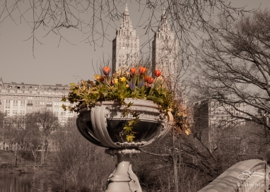 Bow Bridge, Central Park 4/14/2018