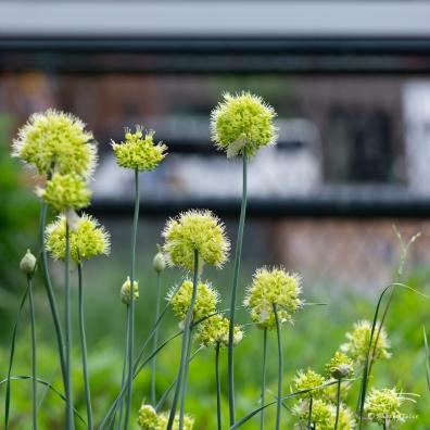 Plant, High Line 5/28/2018