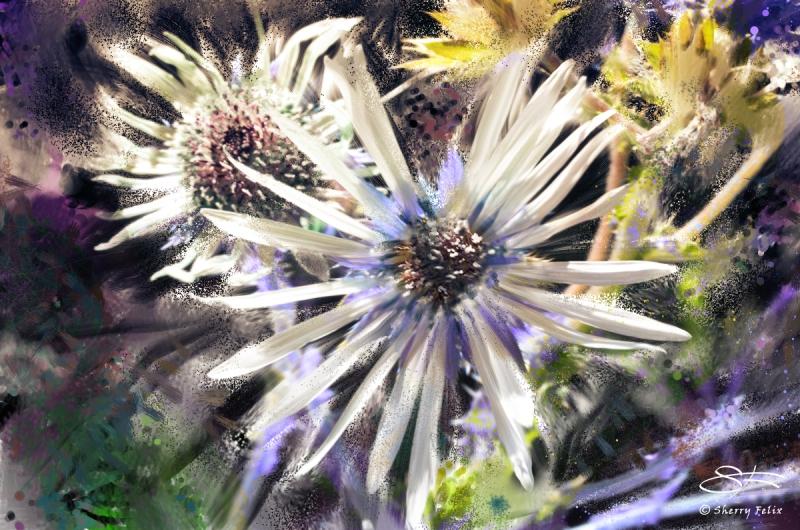 20180727-white-daisy