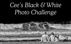 Cee's B&W Photo Challenge