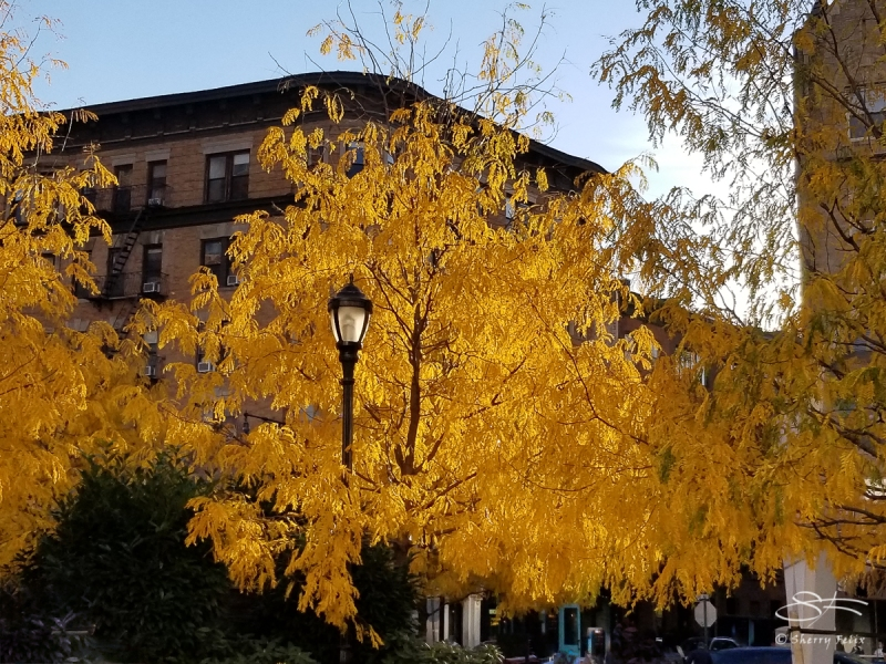 Greenwich Ave and Bank Street, 11/4/2018
