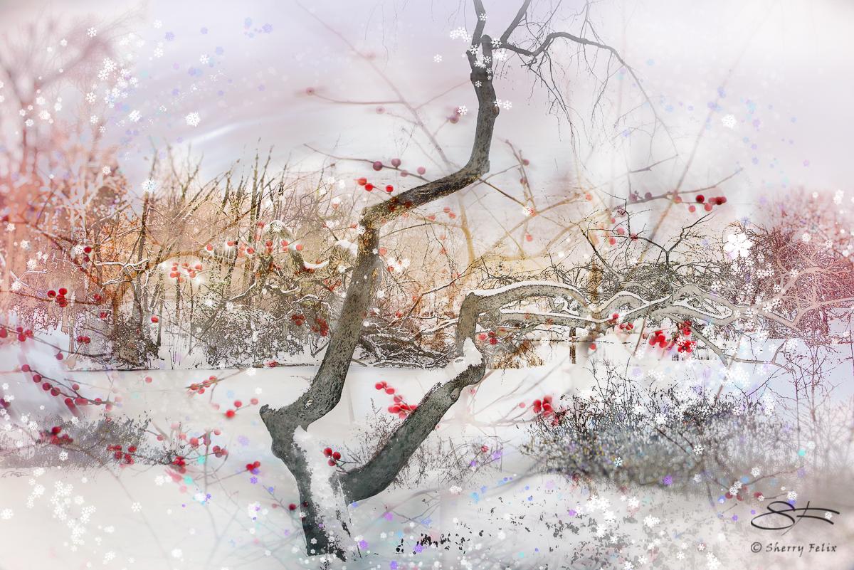 Christmas Tree, Central Park 2018