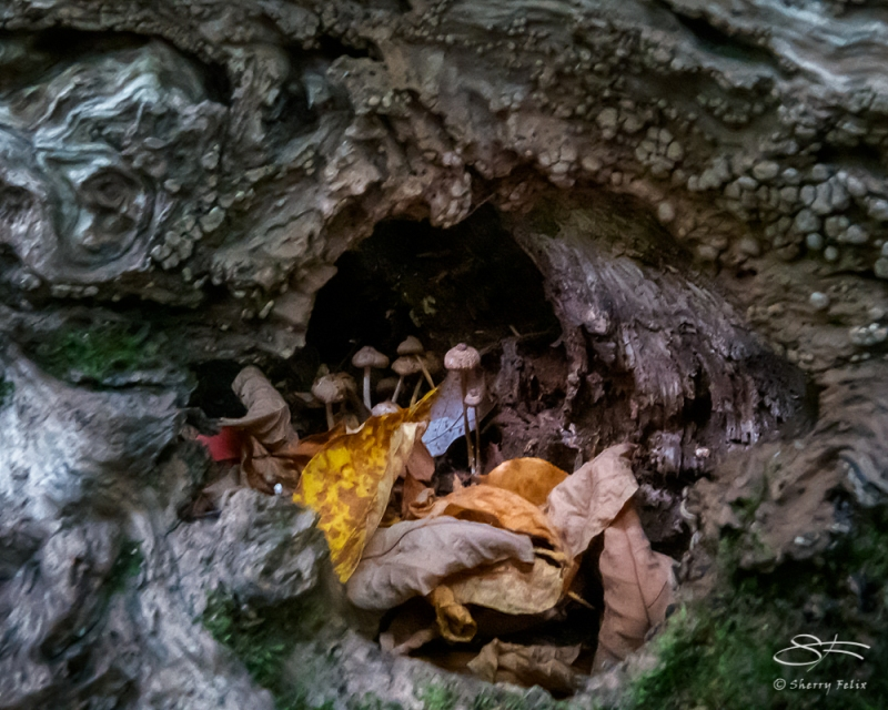 Fungi, NYBG 10/11/2020